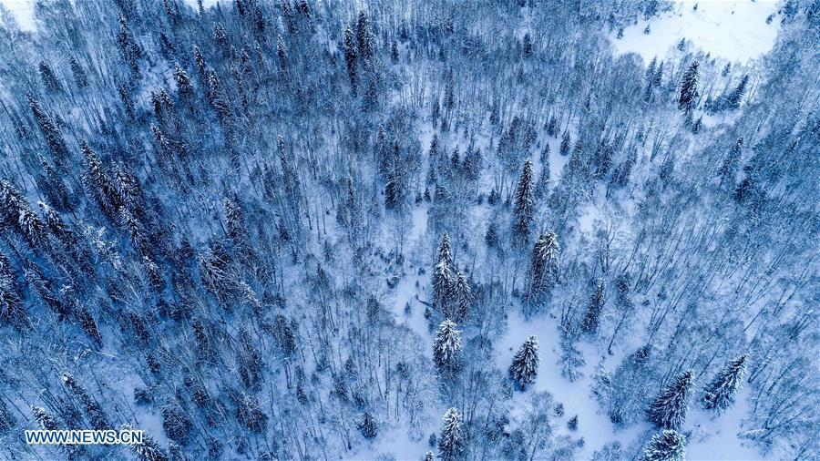 Aerial photo taken on Jan. 2, 2019 shows forest covered by snow in Kanas, northwest China\'s Xinjiang Uygur Autonomous Region. Kanas scenic spot attracts lots of visitors in winter with its pure snow scenery and various entertainment. (Xinhua/Hu Huhu)