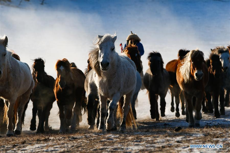 A herdsman drives horses on the snow-covered grassland in Hexigten Banner of Chifeng City, north China\'s Inner Mongolia Autonomous Region, Jan. 6, 2019. Inner Mongolia greets a peak tourism season in winter recently. (Xinhua/Yu Dongsheng)