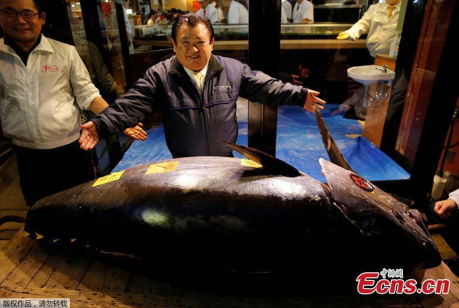 Kiyomura Co\'s President Kiyoshi Kimura (C), who runs a chain of sushi restaurants Sushi Zanmai, poses with a 278kg bluefin tuna, priced with a 333,600,000 yen ($3.1 million) bid at the Toyosu fish market\'s first tuna auction this year at his sushi restaurant in Tokyo, Japan, Jan. 5, 2019. (Photo/Agencies)