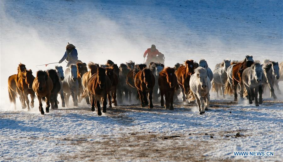 Herdsmen drive horses on the snow-covered grassland in Hexigten Banner of Chifeng City, north China\'s Inner Mongolia Autonomous Region, Jan. 6, 2019. Inner Mongolia greets a peak tourism season in winter recently. (Xinhua/Yu Dongsheng)