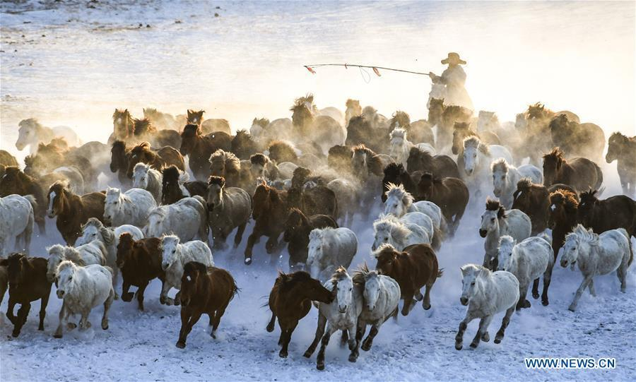 A herdsman drives horses on the snow-covered grassland in Hexigten Banner of Chifeng City, north China\'s Inner Mongolia Autonomous Region, Jan. 6, 2019. Inner Mongolia greets a peak tourism season in winter recently. (Xinhua/Peng Yuan)