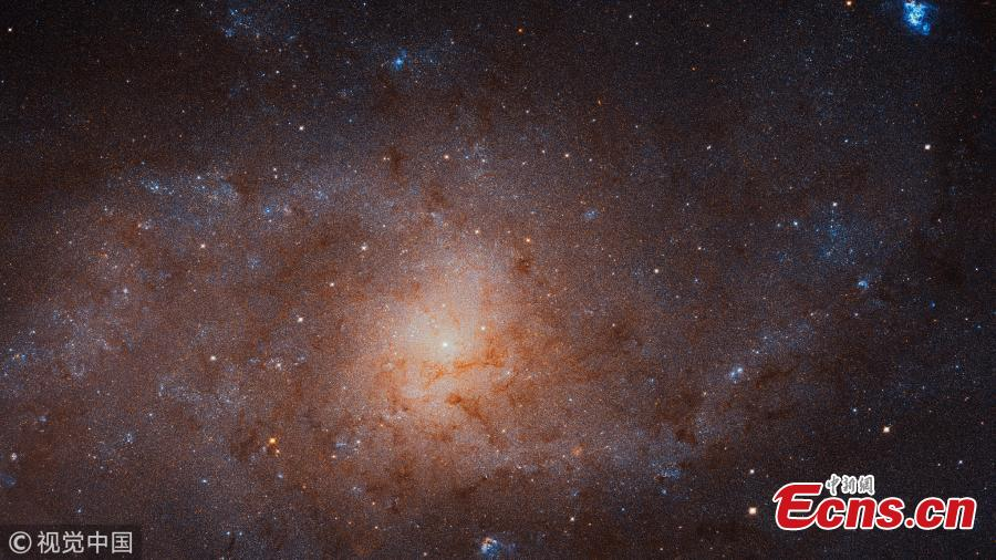 This gigantic image of the Triangulum Galaxy -- also known as Messier 33 -- is a composite of about 54 different pointings with Hubble\'s Advanced Camera for Surveys. With a staggering size of 34 372 times 19 345 pixels, it is the second-largest image ever released by Hubble. It is only dwarfed by the image of the Andromeda Galaxy, released in 2016. (Photo/VCG)
