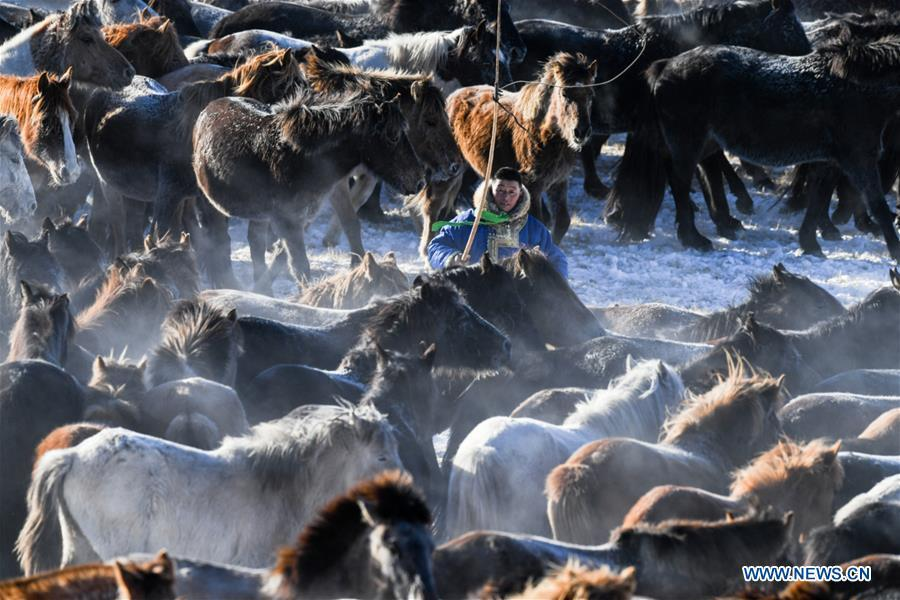 A herdsman tames horses in West Ujimqin Banner, north China\'s Inner Mongolia Autonomous Region, Jan. 8, 2019. (Xinhua/Liu Lei)