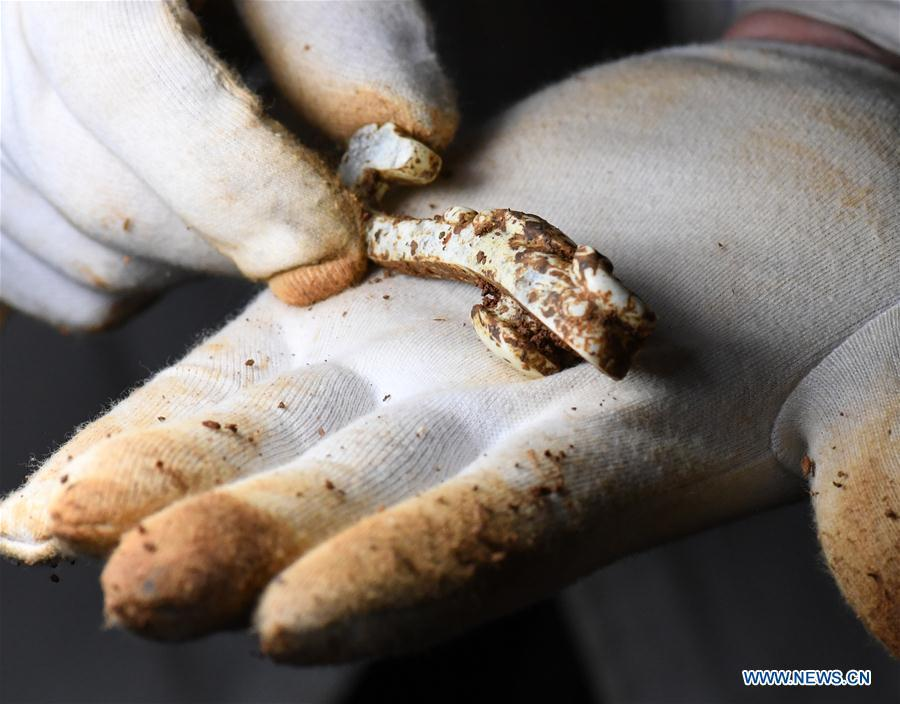 Photo taken on Jan. 28, 2018 shows a jade hook relic unearthed from the No. 5 tomb of the Marquis of Haihun site in Nanchang, east China\'s Jiangxi Province. The National Cultural Heritage Administration will work out a plan to better protect cultural relics and speed up the creation of a safety oversight platform in 2019. Stressing the importance of such protection, Liu Yuzhu, head of the administration, said lax enforcement is a prominent problem that endangers cultural relics, at a meeting attended by cultural heritage administrators nationwide. (Xinhua/Li He)