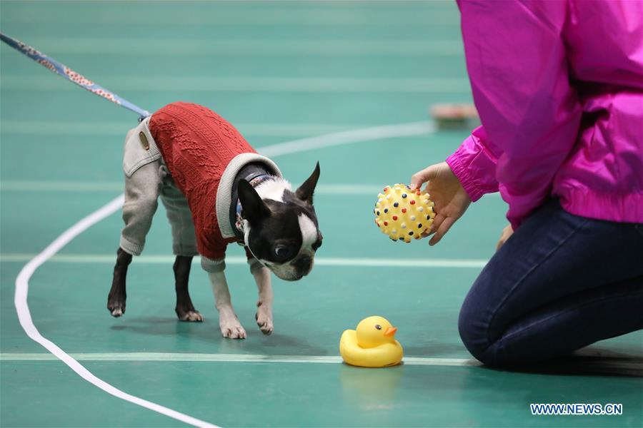 A pet dog is seen at \
