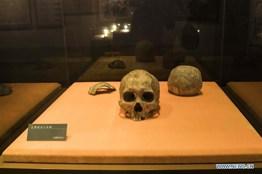 Photo taken on Jan. 8, 2019 shows a set of human skull fossil discovered at Jalainur District at Jalainur Museum in Manzhouli, north China\'s Inner Mongolia Autonomous Region. A carbon-14 dating study on four skull samples discovered at Jalainur District, Manzhouli City in northern China\'s Inner Mongolia Autonomous Region confirmed the earliest sample was around 10,113 years old, researchers announced Saturday in Beijing. Jalainur, a county-level district under the jurisdiction of Manzhouli City, is located near Russia and Mongolia. Starting in March 2018, the study was jointly conducted by researchers from Peking University (PKU) and the school of archaeology at Jilin University. (Xinhua/Darhan)