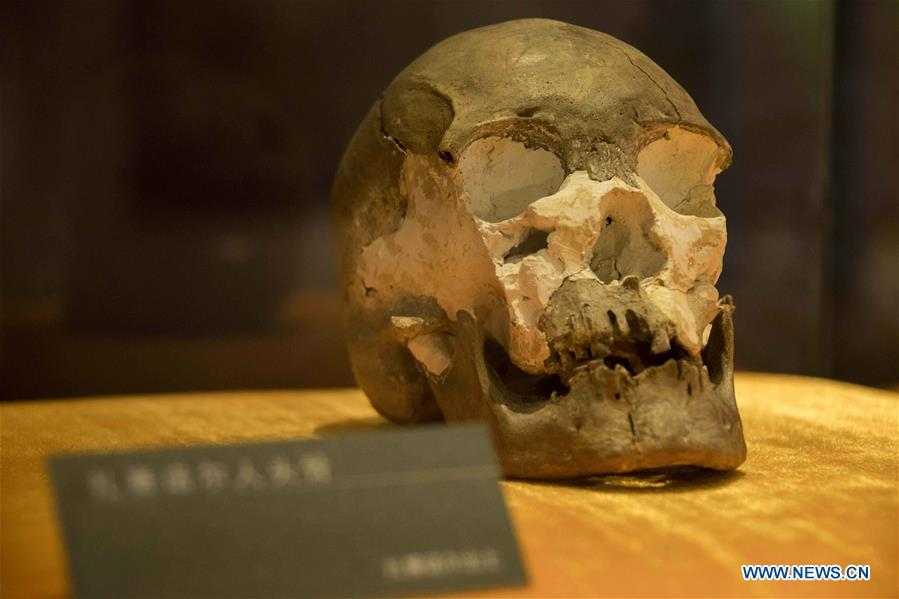 Photo taken on Jan. 8, 2019 shows a human skull fossil discovered at Jalainur District at Jalainur Museum in Manzhouli, north China\'s Inner Mongolia Autonomous Region. A carbon-14 dating study on four skull samples discovered at Jalainur District, Manzhouli City in northern China\'s Inner Mongolia Autonomous Region confirmed the earliest sample was around 10,113 years old, researchers announced Saturday in Beijing. Jalainur, a county-level district under the jurisdiction of Manzhouli City, is located near Russia and Mongolia. Starting in March 2018, the study was jointly conducted by researchers from Peking University (PKU) and the school of archaeology at Jilin University. (Xinhua/Darhan)