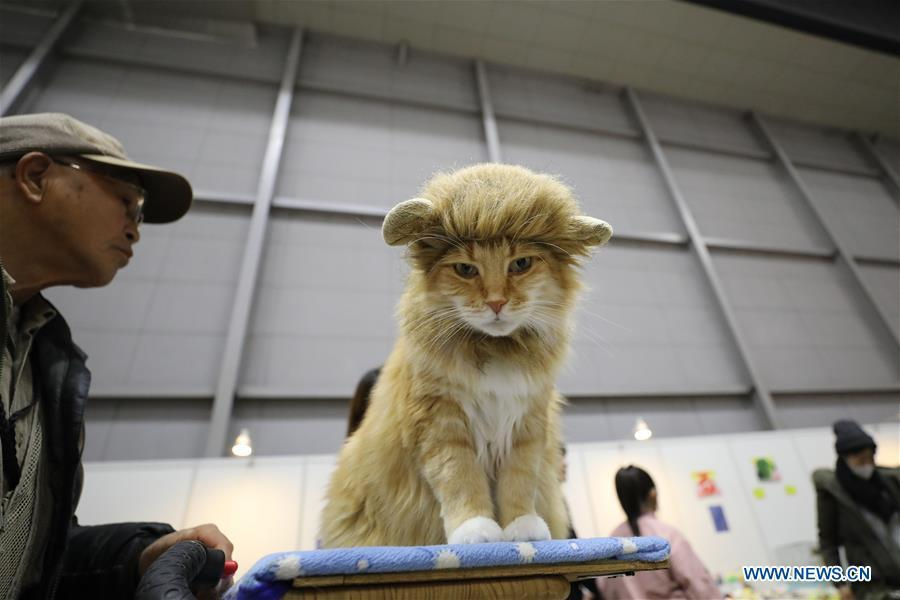A cat is seen at \