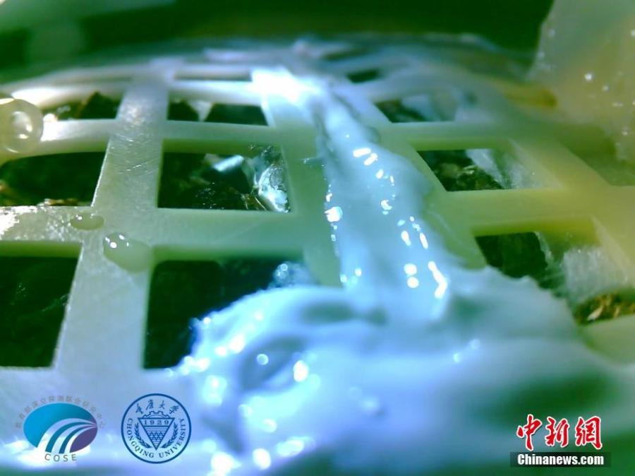Photo shows a cotton seed aboard China\'s Chang\'e-4 lunar probe has sprouted, marking mankind\'s first biological experiment carried out on the moon. (Photo/Chongqing University)