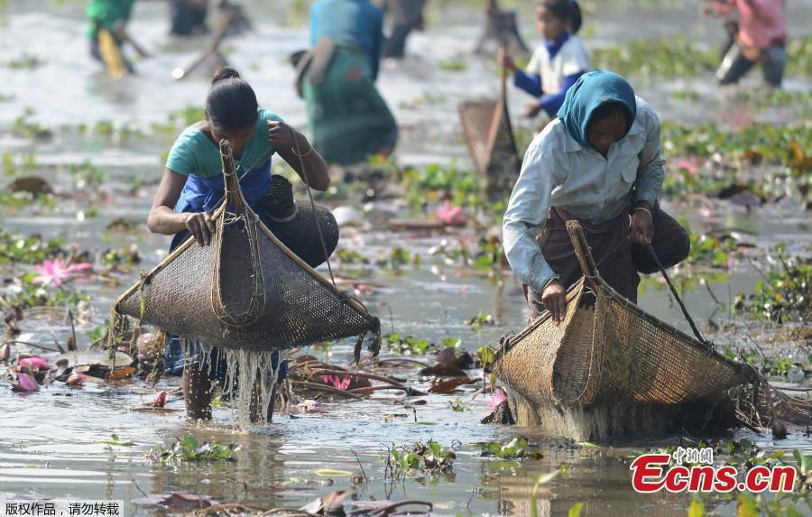 Indian villagers participate in community fishing as part of Bhogali Bihu celebrations in Panbari village, some 50 kilometers east of Gauhati, India, Jan. 14, 2019. \