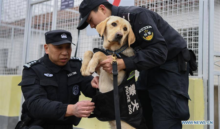 Trainers Ding Yan (R) and Zhang Ning dress police dog \