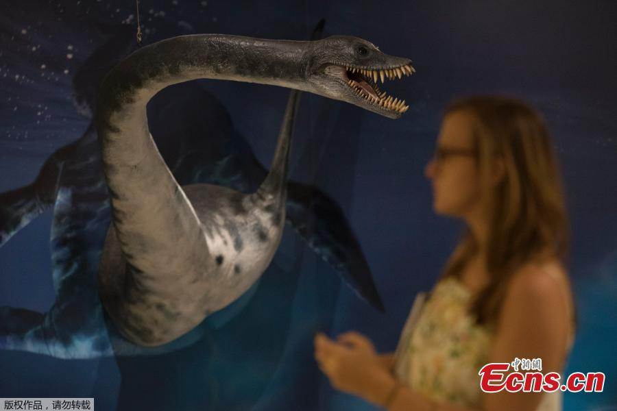 A sculpture of the marine reptile Plesiosaur is displayed at an exhibit about the studies of researchers from the National Museum made in Antarctica, during a media presentation of the exhibit in Rio de Janeiro, Brazil, Jan. 16, 2019. The National Museum will inaugurate on Jan. 17 their first exhibition after the fire, held at the building that houses the Cultural Center and Museum of Brazil's Mint. (Photo/Agencies)