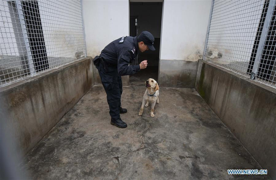 Wuhan railway policeman Ding Yan trains police dog \