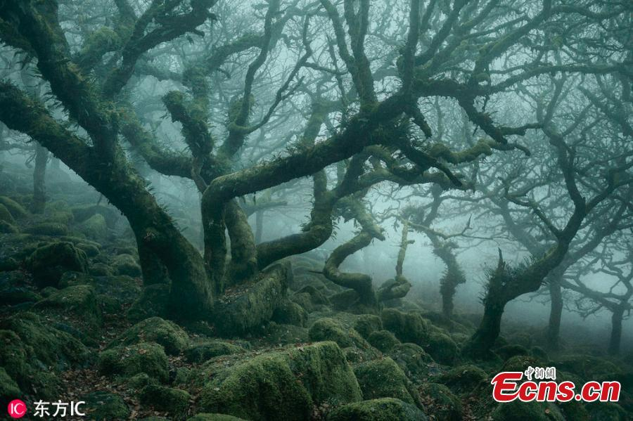Neil Burnell, 44, captured the incredibly atmospheric images of Wistmans Wood in Dartmoor, Devon, over the course of last year. This amazing fairytale forest might look like something from Lord of the Rings. Neil Burnell is a graphic designer and fine art photographer from Devon. He said the scene bore a striking resemblance to Middle Earth\'s Fangorn Forest. Neil, who named his photo project \'The Mystical\', visited the difficult-to-find woodland 20 times to get the perfect shots. (Photo/IC)