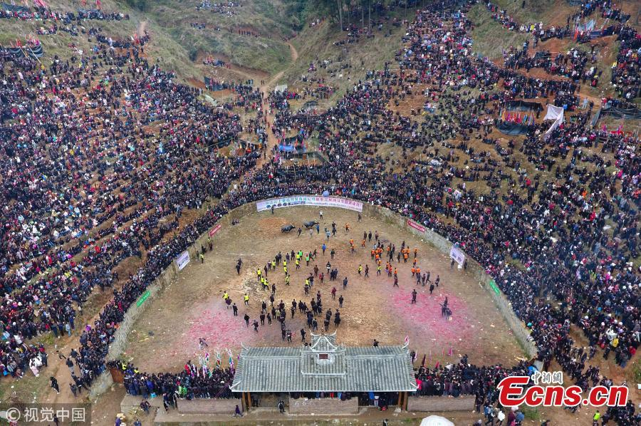 Villagers watch a traditional buffalo fight in Congjiang County, Southwest China\'s Guizhou Province. Eighteen buffalos participated in the annual fight, held to celebrate the upcoming Spring Festival, China's Lunar New Year that falls on February 5 this year. (Photo/VCG)