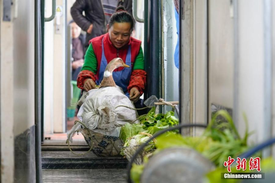 A woman carries a duck with her on a train to Guiyang City, Guizhou Province, Jan. 17, 2019. The railway line linking Guiyang City and Yuping County in Tongren County has been running for 44 years - opening in 1975 - connecting the villages of the many ethnic groups residing deep in the mountains with the outside world. The 342-km journey takes about seven hours - incredibly slow when compared with the speeds of China\'s increasingly ubiquitous bullet trains. (Photo: China News Service/He Junyi)