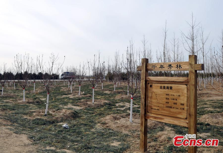 A view of a forest that is being developed in Xiongan New Area in North China\'s Hebei Province. Progress has been made two years after China announced the establishment of Xiongan New Area in April 2017, spanning three counties in Hebei Province about 100 km southwest of Beijing. (Photo: China News Service/Han Bing)