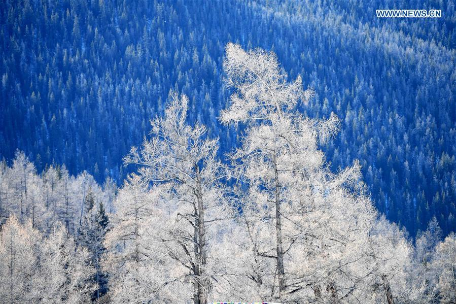 Photo taken on Jan. 19, 2019 shows the winter scenery of Keketuohai scenic spot in Altay, northwest China\'s Xinjiang Uygur Autonomous Region. (Xinhua/Sadat)