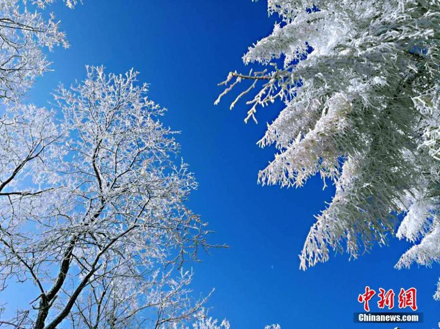 A view of a snow-covered Changlinggang forest in Jianshi County, Central China's Hubei Province, Jan. 21, 2019. Plantation of the forest at an altitude over 1,500 meters started in 1957. Today it is a major Japanese larch production base in China and a tourist attraction in all seasons. (Photo: China News Service/Zhang Shiping)