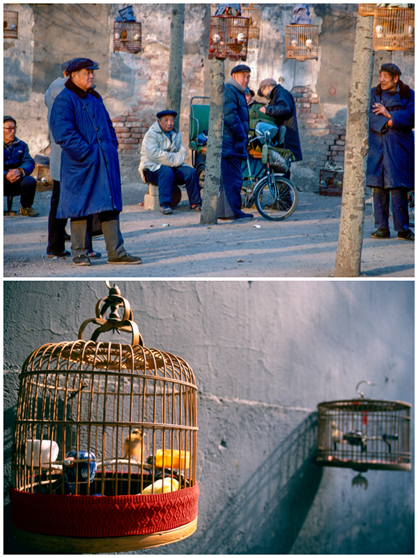 Song bird cages 1995 and 2000 (Photo/chinadaily.com.cn)