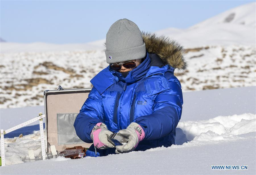 Researcher Yan Xue, 23, the youngest member of the team, collects data of snow cover in Zhaosu County, northwest China\'s Xinjiang Uygur Autonomous Region, Jan. 18, 2019. A nine-member research team with an average age under 30 from the Xinjiang Institute of Ecology and Geography under the Chinese Academy of Sciences started a research on snow cover on the Tianshan Mountains in Xinjiang. Snow cover on the Tianshan Mountains is an important source of water resources. Snowmelt provides an abundant water supply for river flow in this area and also affects the ecological system of agricultural and animal husbandry production in the downstream oasis. (Xinhua/Hu Huhu)