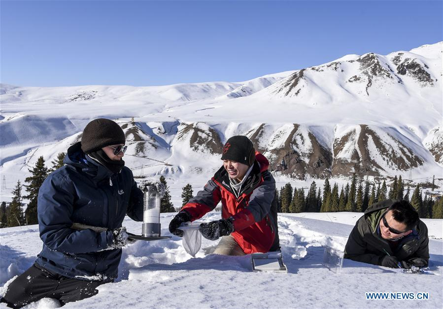 Researchers Yang Tao (L), Wei Wenyu(C) and Hao Jiansheng collect data of snow cover in Hejing County, northwest China\'s Xinjiang Uygur Autonomous Region, Jan. 20, 2019. A nine-member research team with an average age under 30 from the Xinjiang Institute of Ecology and Geography under the Chinese Academy of Sciences started a research on snow cover on the Tianshan Mountains in Xinjiang. Snow cover on the Tianshan Mountains is an important source of water resources. Snowmelt provides an abundant water supply for river flow in this area and also affects the ecological system of agricultural and animal husbandry production in the downstream oasis. (Xinhua/Hu Huhu)