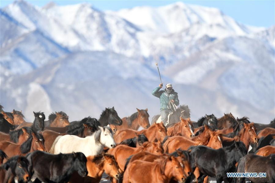 A herdsman keeps the herd together at the snow-covered Shandan Ranch with the Qilian Mountains in the background in Shandan County of Zhangye City, northwest China\'s Gansu Province, Jan. 23, 2019. (Xinhua/Chen Bin)