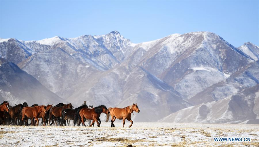 A herd of horses are seen at the snow-covered Shandan Ranch with the Qilian Mountains in the background in Shandan County of Zhangye City, northwest China\'s Gansu Province, Jan. 23, 2019. (Xinhua/Chen Bin)