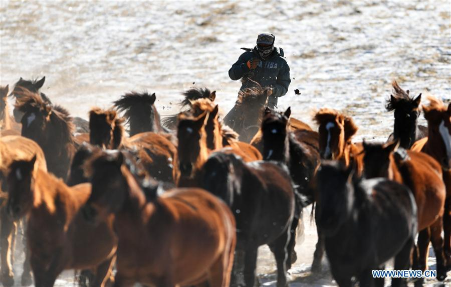 A herdsman keeps the herd together at the snow-covered Shandan Ranch in Shandan County of Zhangye City, northwest China\'s Gansu Province, Jan. 23, 2019. (Xinhua/Li Xiao)