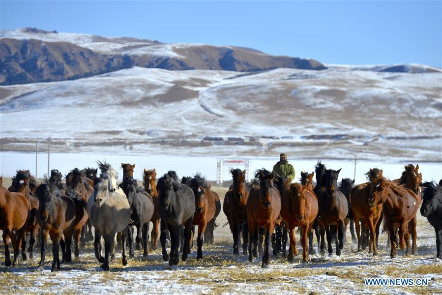 A herdsman keeps the herd together at the snow-covered Shandan Ranch with the Qilian Mountains in the background in Shandan County of Zhangye City, northwest China\'s Gansu Province, Jan. 23, 2019. (Xinhua/Li Xiao)