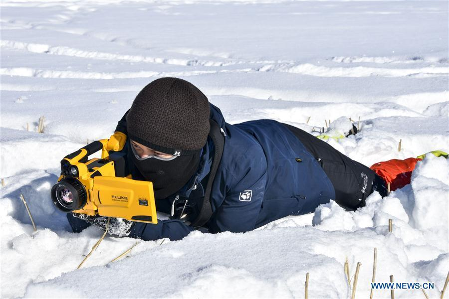 Researcher Yang Tao collects data of snow cover in Zhaosu County, northwest China\'s Xinjiang Uygur Autonomous Region, Jan. 19, 2019. A nine-member research team with an average age under 30 from the Xinjiang Institute of Ecology and Geography under the Chinese Academy of Sciences started a research on snow cover on the Tianshan Mountains in Xinjiang. Snow cover on the Tianshan Mountains is an important source of water resources. Snowmelt provides an abundant water supply for river flow in this area and also affects the ecological system of agricultural and animal husbandry production in the downstream oasis. (Xinhua/Bai Jiali)