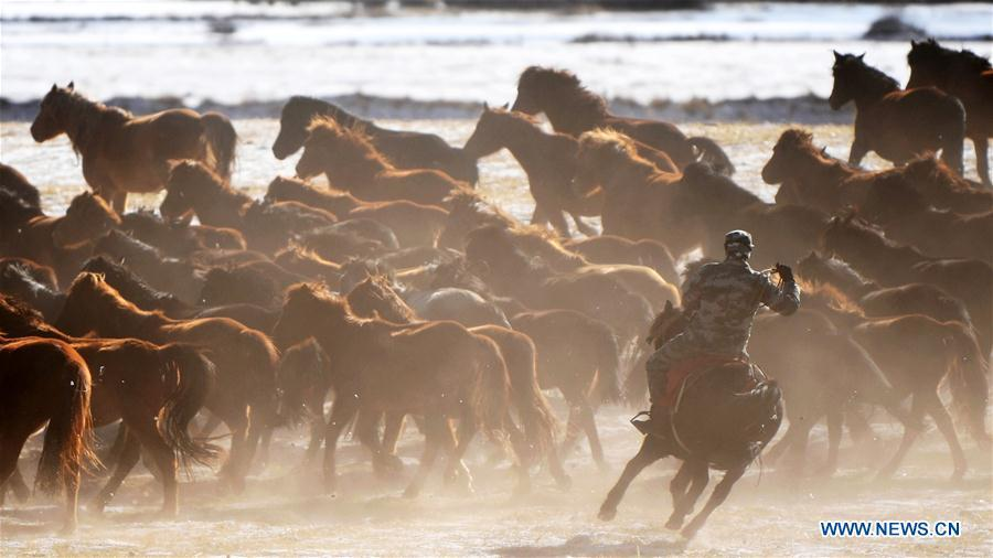 A herdsman keeps the herd together at the snow-covered Shandan Ranch in Shandan County of Zhangye City, northwest China\'s Gansu Province, Jan. 23, 2019. (Xinhua/Chen Bin)