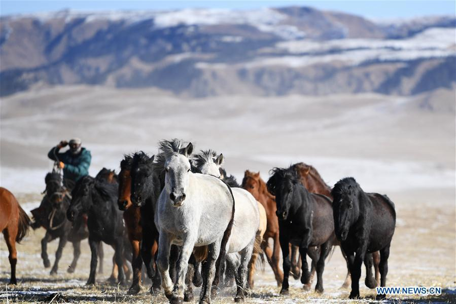 A herd of horses are seen galloping on the snow-covered grassland at the Shandan Ranch with the Qilian Mountains in the background in Shandan County of Zhangye City, northwest China\'s Gansu Province, Jan. 23, 2019. (Xinhua/Li Xiao)