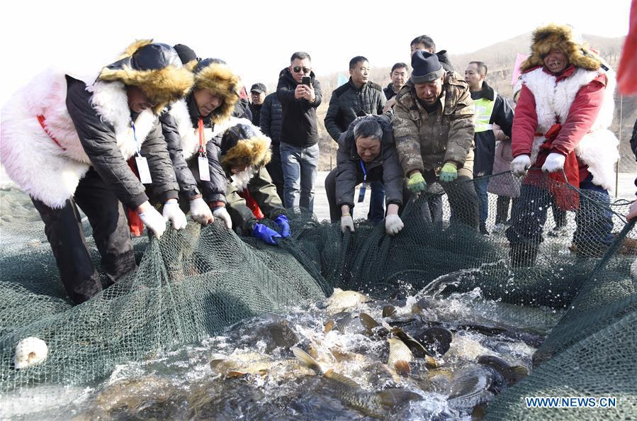 Inheritors of Chagan Lake winter fishing heritage pull the fishing net in Qianyaozi Reservoir in Hohhot, capital of north China\'s Inner Mongolia Autonomous Region, Jan. 26, 2019. A two-day winter fishing tourism festival opened here on Saturday, during which 18 inheritors of Chagan Lake winter fishing showed visitors traditional ways of fishing. Winter fishing on ice-covered Chagan Lake dates back to the Liao and Jin dynasties from 10th century to the 13th century in China and was listed into the national intangible cultural heritage in 2008. (Xinhua/Wang Zheng)