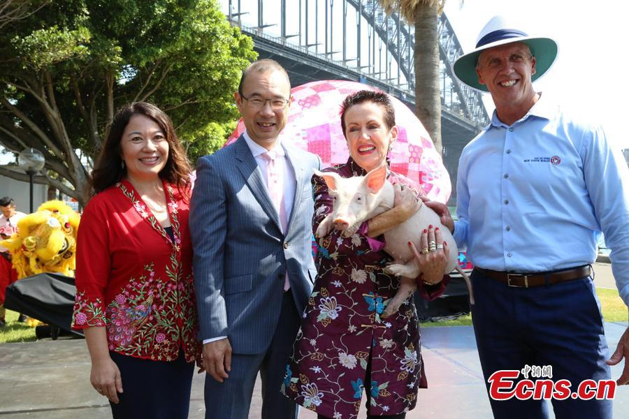Sydney lord mayor Clover Moore (L, 3rd) holds a piglet during a preview of the 2019 Lunar New Year festivities in Sydney, Australia, Jan. 29, 2019. The 10-day festival which begins on Friday is the largest of its kind outside of Asia and according to authorities Sydneysiders will be treated to cultural delights centering around this year\'s zodiac sign, the pig. This year\'s events will include the largest dragon boat races in the southern hemisphere, culinary events, workshops, lion dancing and live cultural performances. (Photo: China News Service/Tao Shelan)