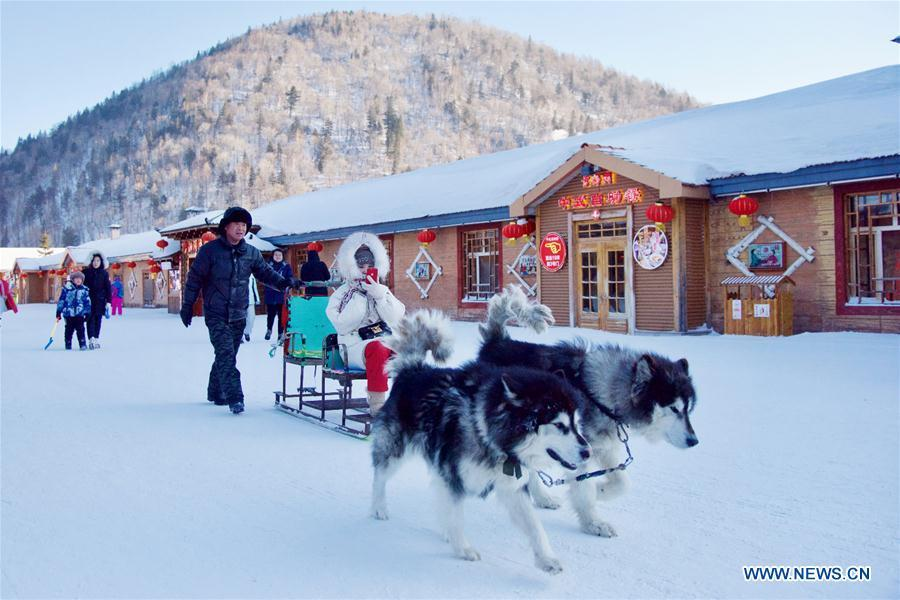A tourist experiences dog sledding at Shuangfeng Forest Farm in Mudanjiang City, northeast China\'s Heilongjiang Province, Jan. 31, 2019. The Shuangfeng Forest Farm witnesses frequent snowfalls and is covered with snow for most of the year. The beautiful snow scenery here attracts many visitors from at home and abroad every year. (Xinhua/Yang Siqi)
