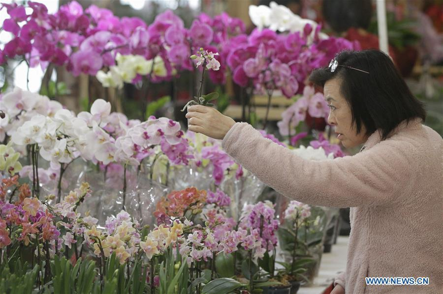 A resident selects plants at the 30th Chinese Lunar New Year Flower & Gift Fair in Richmond, Canada, Jan. 30, 2019. The seven-day Chinese Lunar New Year Flower & Gift Fair, west Canada\'s largest indoor Lunar New Year festivity, was opened on Tuesday. (Xinhua /Liang Sen)