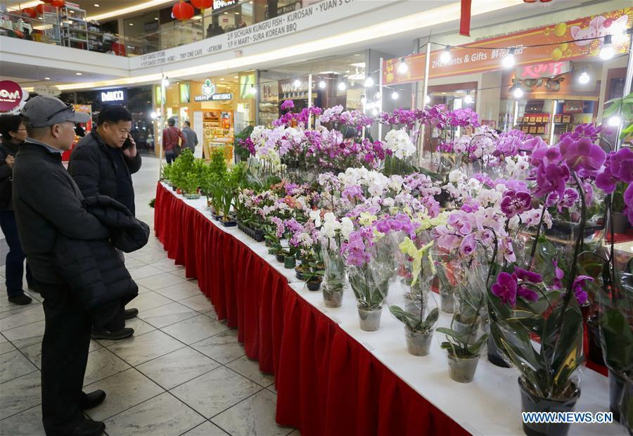 People shop for plants to prepare for the upcoming Chinese Lunar New Year at the 30th Chinese Lunar New Year Flower & Gift Fair in Richmond, Canada, Jan. 30, 2019. The seven-day Chinese Lunar New Year Flower & Gift Fair, west Canada\'s largest indoor Lunar New Year festivity, was opened on Tuesday. (Xinhua /Liang Sen)