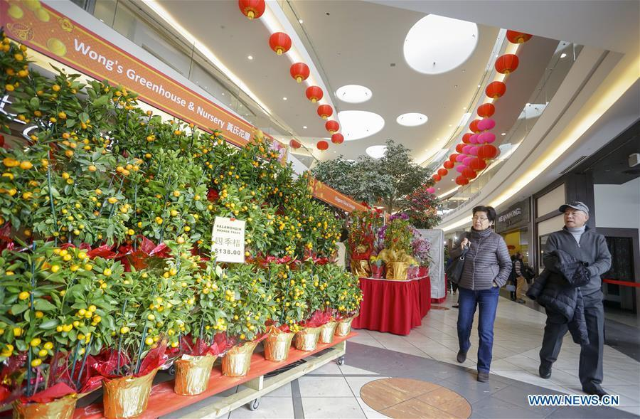 People select mandarin trees while visiting the 30th Chinese Lunar New Year Flower & Gift Fair in Richmond, Canada, Jan. 30, 2019. The seven-day Chinese Lunar New Year Flower & Gift Fair, west Canada\'s largest indoor Lunar New Year festivity, was opened on Tuesday. (Xinhua /Liang Sen)