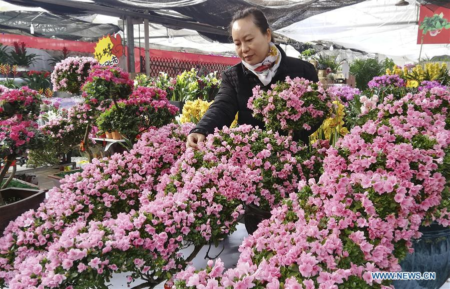 A customer selects flowers at a flower market in Shijiazhuang, capital of north China\'s Hebei Province, Jan. 31, 2019. People in Shijiazhuang are busy buying flowers to decorate their home as a way to greet the upcoming Spring Festival, which falls on Feb. 5 this year. (Xinhua/Wang Baolong)
