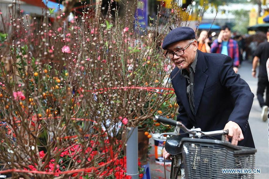 A man chooses peach blossoms for the upcoming Lunar New Year in Hanoi, capital of Vietnam, Feb. 1, 2019. The Lunar New Year festival, also called Tet in Vietnamese, is one of the long-standing traditions of Vietnamese people. (Xinhua/Wang Di)
