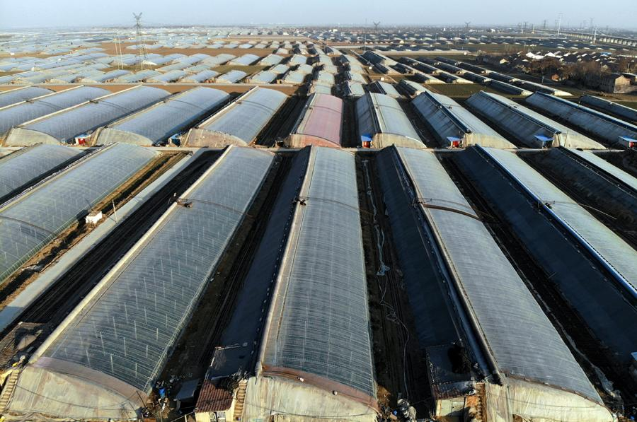 Tomato greenhouses in Zhengjia village, Huangcheng town, Linzi, Shandong province. (Photo by WANG JING/CHINA DAILY)