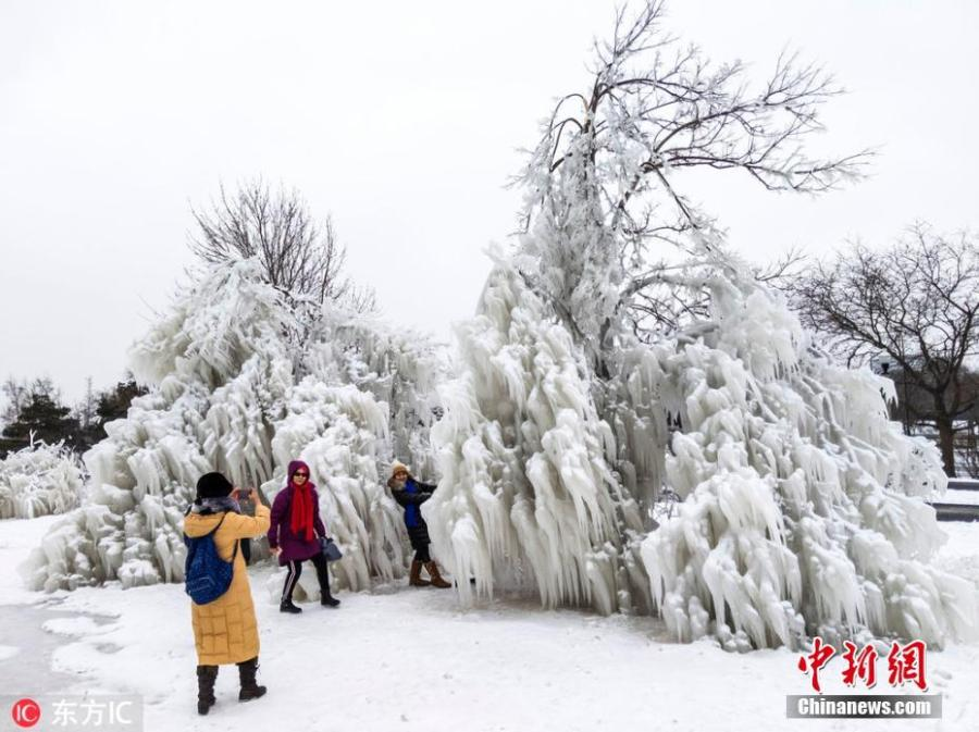 Snow covered trees in Chicago amid the cold front that brought minus 25 degree temperatures. Meteorologists blamed a phenomenon called the polar vortex for the bitter cold that has descended on much of the central and eastern United States this week.(Photo/IC)
