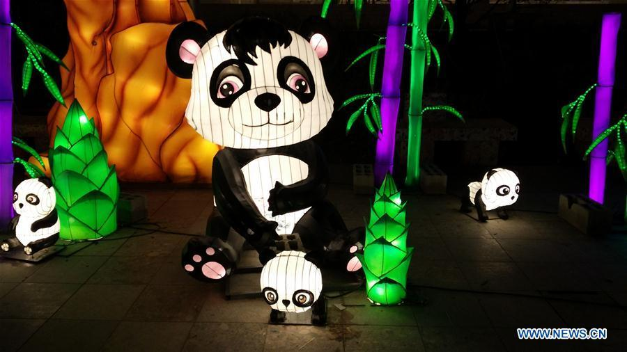 Giant panda-shaped lanterns are seen at the Chinese Lantern Festival in Tirana, capital of Albania, on Feb. 1, 2019. Albania joined the celebration of the Chinese New Year, with a ceremony marking the opening of \
