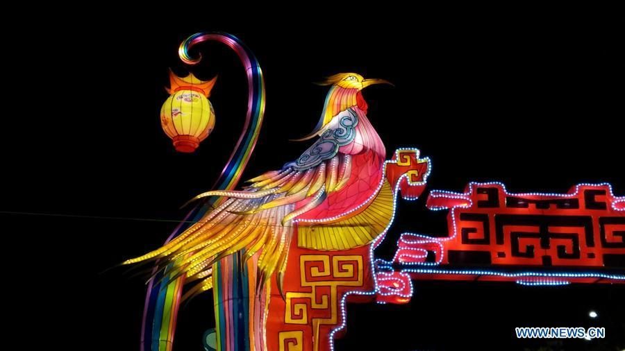 A phoenix-shaped lantern is seen at the Chinese Lantern Festival in Tirana, capital of Albania, on Feb. 1, 2019. Albania joined the celebration of the Chinese New Year, with a ceremony marking the opening of \