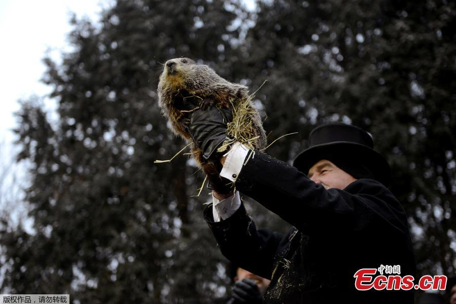 Punxsutawney Phil\'s co-handler AJ Dereume introduces the groundhog to reporters on the 133rd Groundhog Day in Punxsutawney, Pennsylvania, U.S., February 2, 2019. Around 7:30 a.m. on Saturday, Punxsutawney Phil emerged from his slumber and didn't see his shadow, meaning an early spring is apparently on the horizon. According to the Punxsutawney Groundhog Club, the iconic creature's predictions are only 39 percent accurate.(Photo/Agencies)