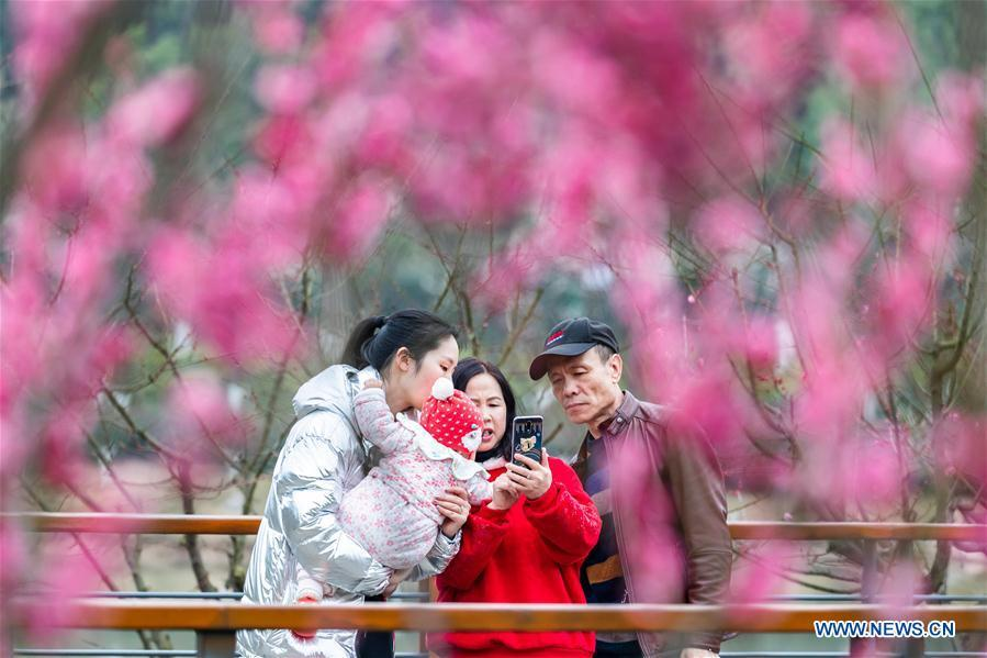 People take photos of plum blossoms during Spring Festival holiday at an ecological park in Nanchuan District of Chongqing, southwest China, Feb. 7, 2019. (Xinhua/Qu Mingbin)