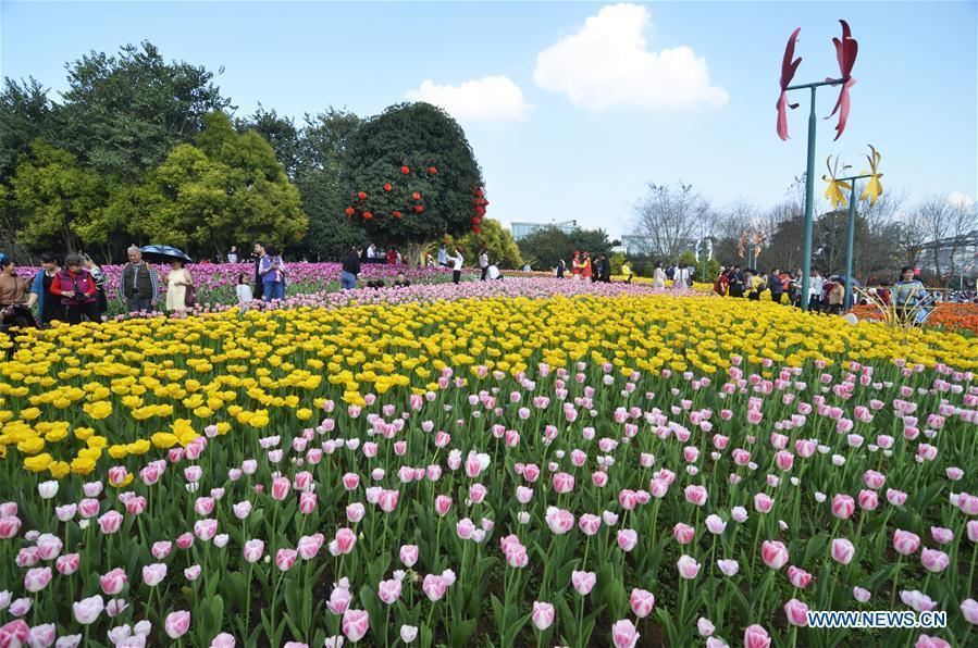 Tourists enjoy tulip flowers during Spring Festival holiday at Liuzhou Expo Garden in Liuzhou City, south China\'s Guangxi Zhuang Autonomous Region, Feb. 7, 2019. (Xinhua/Li Bin)