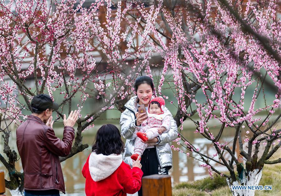 People pose for photos with plum blossoms during Spring Festival holiday at an ecological park in Nanchuan District of Chongqing, southwest China, Feb. 7, 2019. (Xinhua/Qu Mingbin)