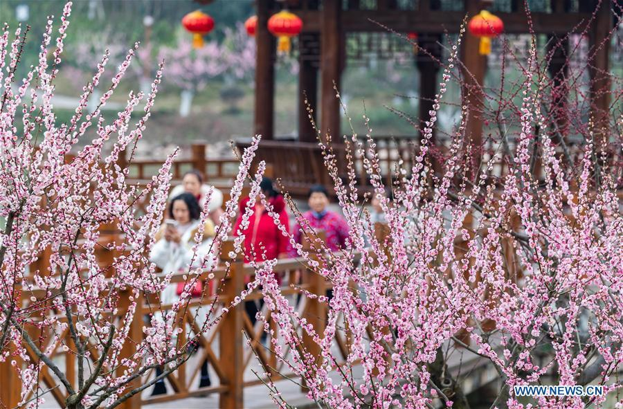 People enjoy the plum blossoms during Spring Festival holiday at an ecological park in Nanchuan District of Chongqing, southwest China, Feb. 7, 2019. (Xinhua/Qu Mingbin)